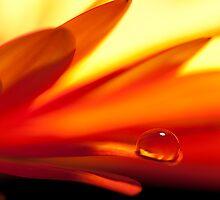 Warm madness by Diego Baroni