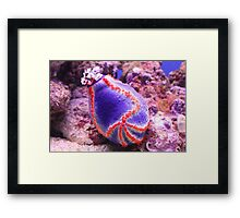 Sea Urchin Framed Print