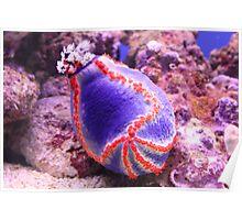 Sea Urchin Poster
