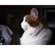 Gracie in Profile Photographic Print