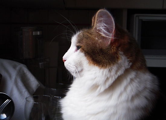 Gracie in Profile by Tama Blough