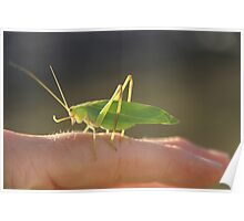 Grass Hopper Poster