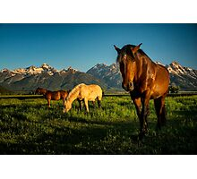 Horses and Mountains Photographic Print