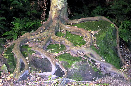 Creeping Rock Roots by Michael John