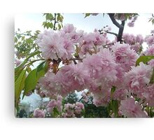 Spring in pink Canvas Print