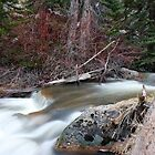 Rushing Spring Meltoff- Strawberry Park Hot Springs, CO  by rwhitney22