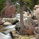 Spring in Steamboat Springs, CO  by rwhitney22