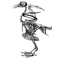 bird skeleton Photographic Print