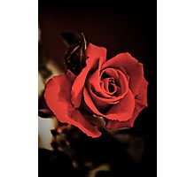 One Red Rose Photographic Print