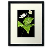 -Starflower at Sunset Framed Print