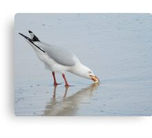 Seagull Snacking Canvas Print