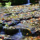 Autumn in Workman Creek, AZ by rwhitney22