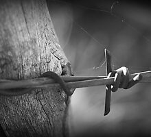 Rustic Barbed Wire, Arizona by rwhitney22