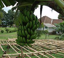 banana tree by bayu harsa