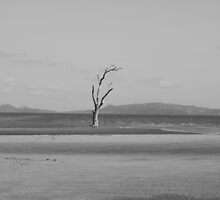 The lonely tree by AlexKokas