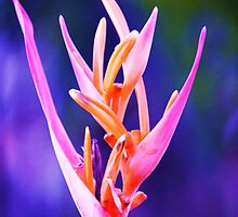 Natures Gift - tropical flower Burrum Heads by Michelle  Martin
