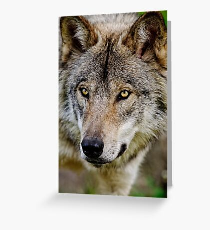 Timberwolf Portrait  Greeting Card