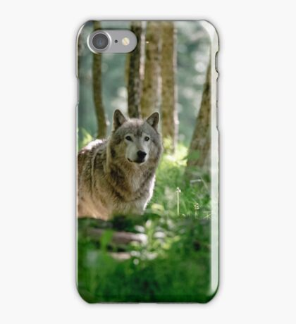 Timberwolf in Forest iPhone Case/Skin