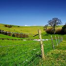 Sheep-Proof Fence by Nigel Finn