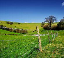 Sheep-Proof Fence by Nigel Finn