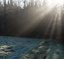 Frosty morning rays by Adrian S. Lock