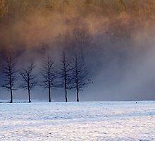 Meadow Mist 1, Roffey Park by Adrian S. Lock