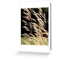 Meadow rushes in the wind Greeting Card