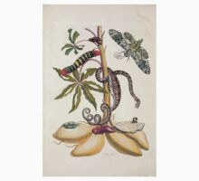 Metamorphosis insectorum surinamensium Maria Sibylla Merian 1705 0024 Insects of Surinam_jpg Baby Tee