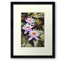 Gilded leaves  Framed Print