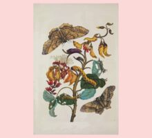 Metamorphosis insectorum surinamensium Maria Sibylla Merian 1705 0042 Insects of Surinam_jpg Baby Tee