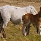 Dartmoor: Mother and Foal by Rob Parsons