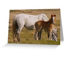 Dartmoor: Mother and Foal Greeting Card