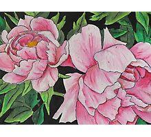 Peony Blooms Photographic Print