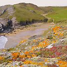 Devon:  Colourful Lichen at Soar Mill Cove by Rob Parsons