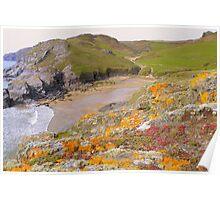 Devon:  Colourful Lichen at Soar Mill Cove Poster