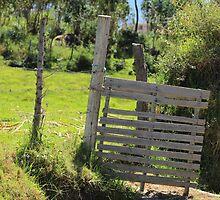 Wood Gate on a Farm by rhamm