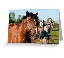 Horse By Cedar Fence Greeting Card