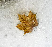 Leaf in ice by Heather Paakkonen