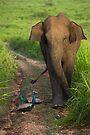 Asian Elephant by Neil Bygrave (NATURELENS)