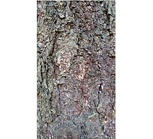 Tree Bark Photographic Print
