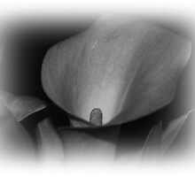 Calla Lily by Jonice