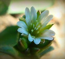A Really Tiny Flower by vigor