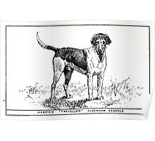 All about dogs a book for doggy people Charles Henry Lane 1900 0047 Harrier_jpg Poster