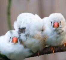 Three Finches Sticker