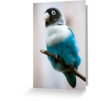Blue Masked Lovebird Greeting Card