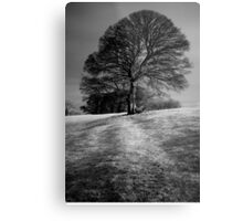 Tree Shaped by the Wind Metal Print