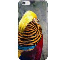 Golden Pheasant (Chrysolophus pictus) iPhone Case/Skin
