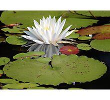 Lily Pad Photographic Print