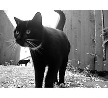 Alley Cats Photographic Print