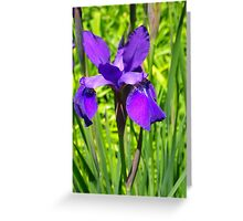 Siberian Iris Greeting Card